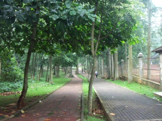 Pedestrian and the Jungle Inside UI Campus