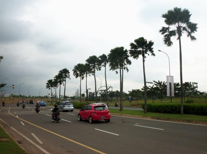 Boulevard BSD - pohon pinang