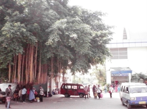 Suasana halaman luar Stasiun Serpong, ada pohon besar yang mungkin sudah cukup lama