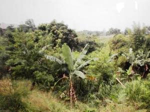 Pemandangan hijau di perjalanan menuju arah Serpong
