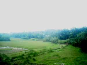 Hijau...hijau..