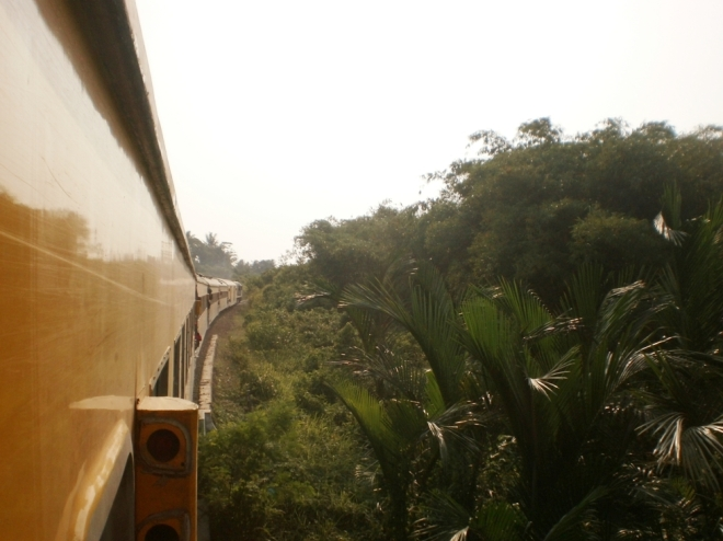 The train and the jungle side by side (2)