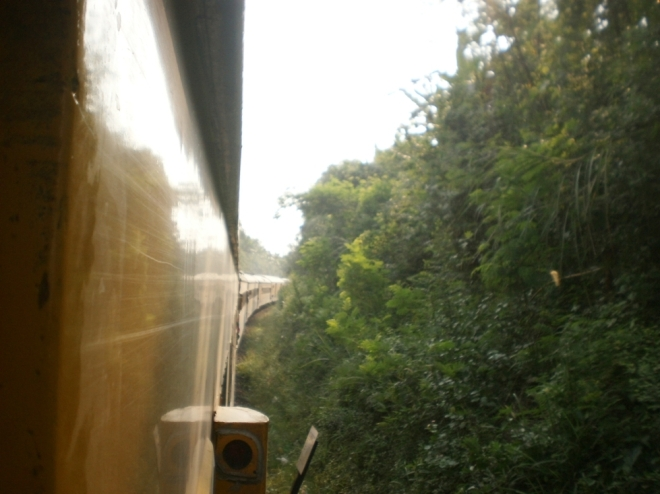 The train and the jungle side by side (1)