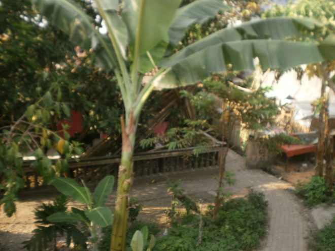 Rangkasbitung houses