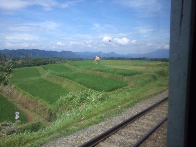The stunning views around Purwakarta - Jatiluhur - Sadang (4) - very beautiful rice fileds, I would love to walk for a long way through this place