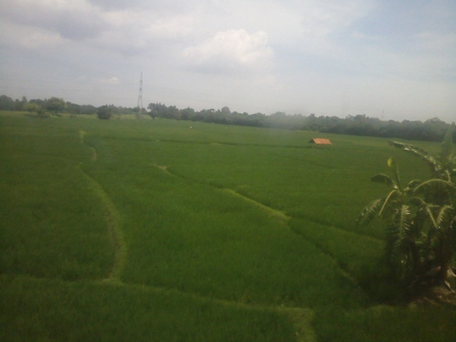 Karawang lush and green rice fields - this Karawang district is famously known with huge size of rice fields, one of the major source of rice in Java  / Indonesia