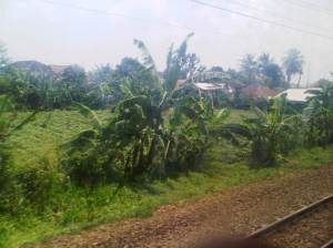 Pemandangan hijau selepas simpang Jalan Baru / Bogor Outer Ring Road