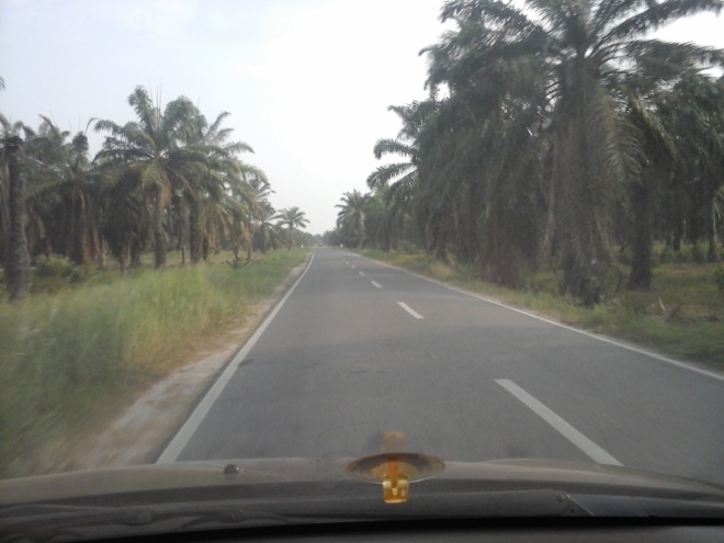 Palm Oil Plantation 5