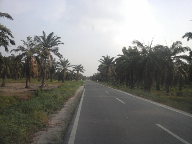 Palm Oil Plantation 2