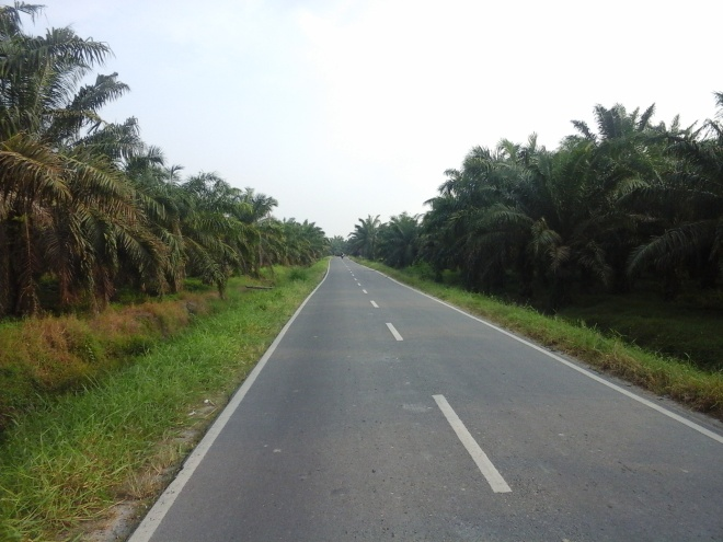 Palm Oil Plantation 1