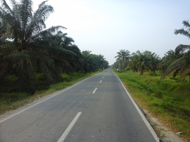 Palm Oil Plantation 4