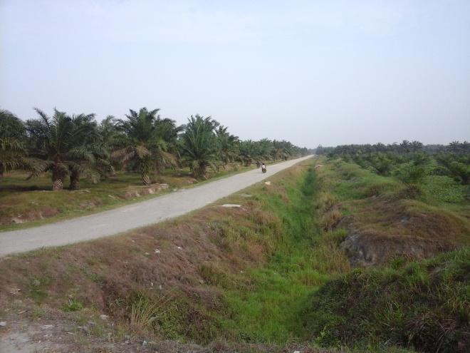 Palm Oil Plantation 3