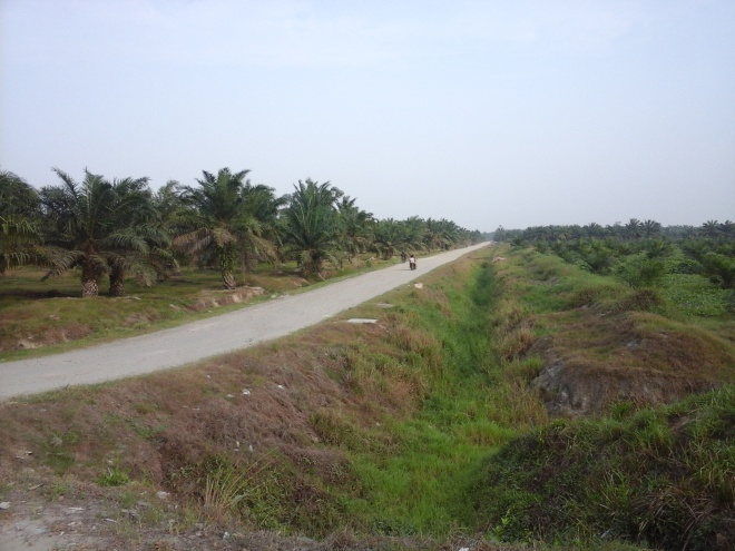 Palm Oil Plantation 3